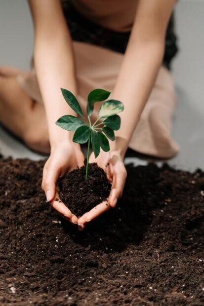 Hälsa hänger ihop med att leva miljövänligt?